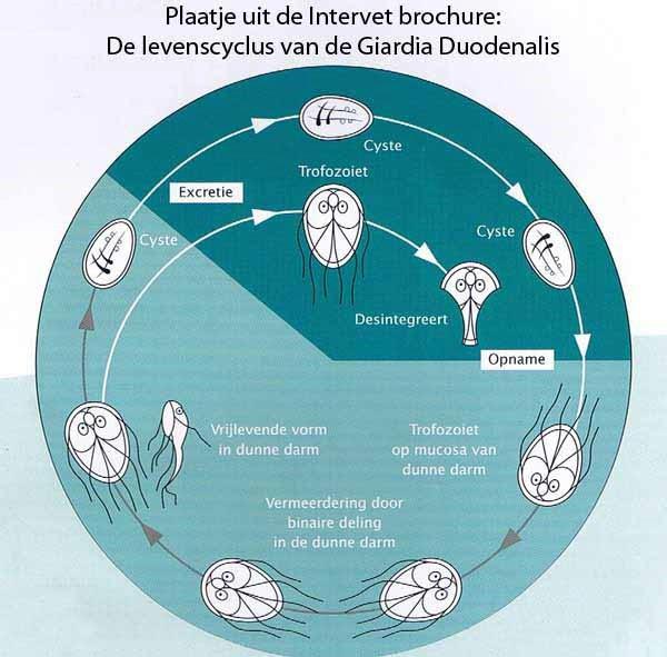 tratamentele cu viermi sunt leacuri rapide viermi de peri