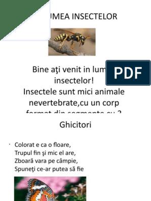 un mic parazit al insectelor ele provoacă enterobioză