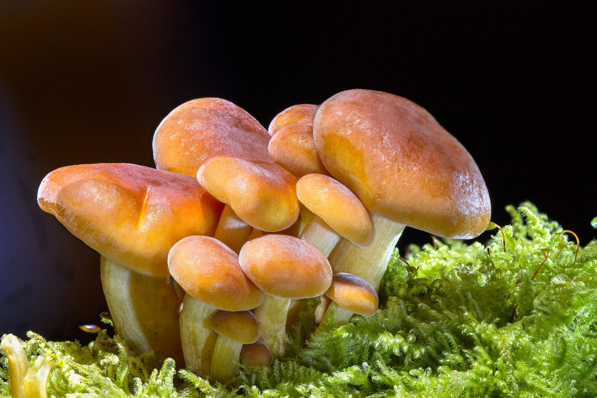 ciuperci vis perioada de incubație a condilomului