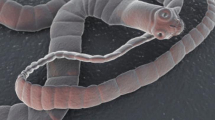 Paraziti si viermi