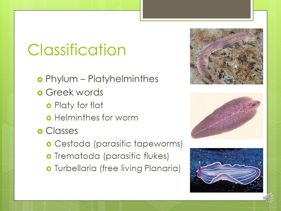 erupție pe abdomen și pe piept intraductal papilloma dangerous