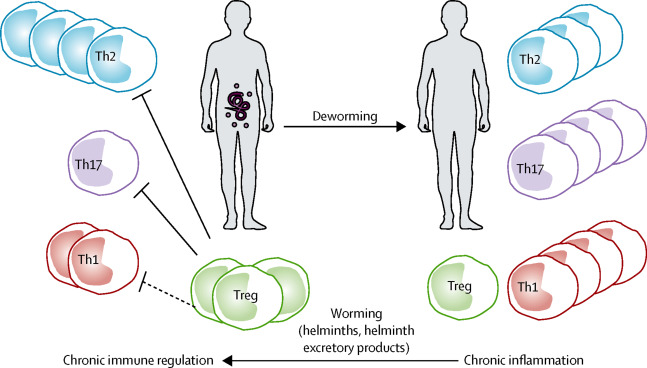 Helminth therapy mast cells