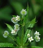 dezintoxicare pe bază de plante anthelmintic pentru recenzii umane