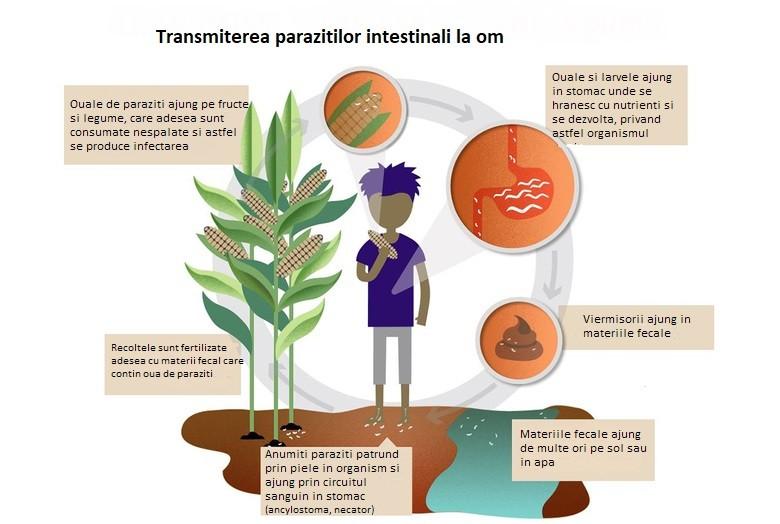 prepararea parazitului de bandă human papillomavirus positive
