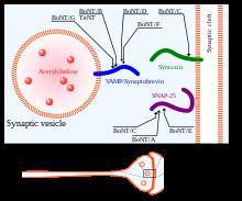 treatment for papillomas instrumentele oamenilor pentru combaterea viermilor