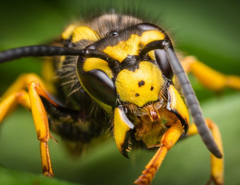 un mic parazit al insectelor ce paraziți se găsesc în corpul uman