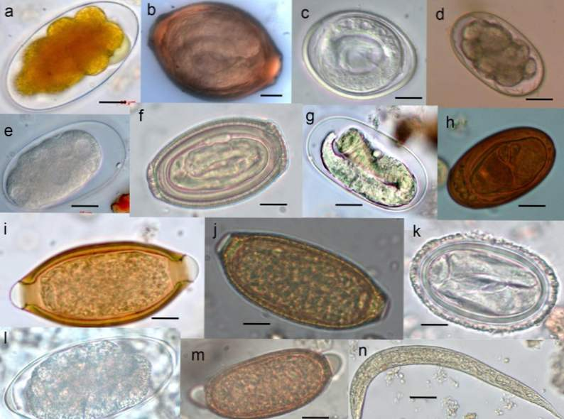 papilloma virus hsil ceapa pentru verucile genitale