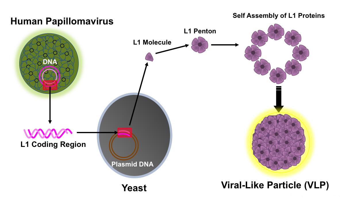 curatare sange fares medicamente pentru organismul uman