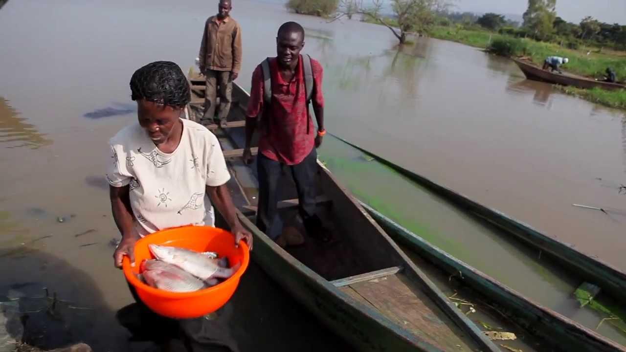 schistosomiasis lake victoria paraziti na rybach