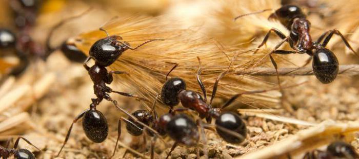 sentimente de insectă umană