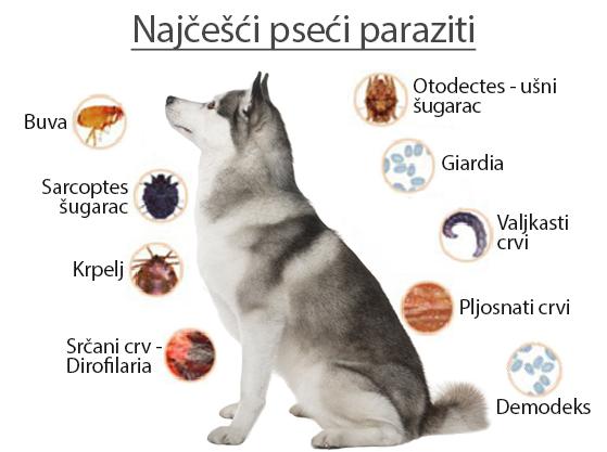 paraziti kod pasa