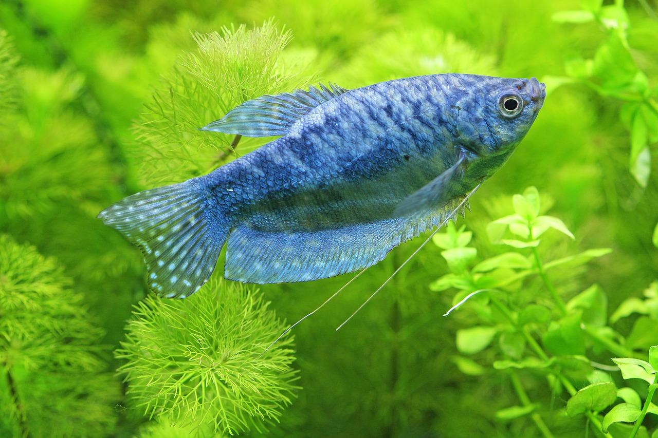 paraziti u rybicek