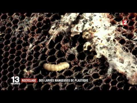 Bacterie qui mange le plastique. Mirahorian: Cheia Sanatatii-Metoda Kuhne Si Baile Derivative