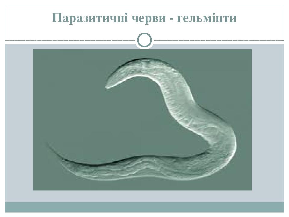 agent de viermi de inimă