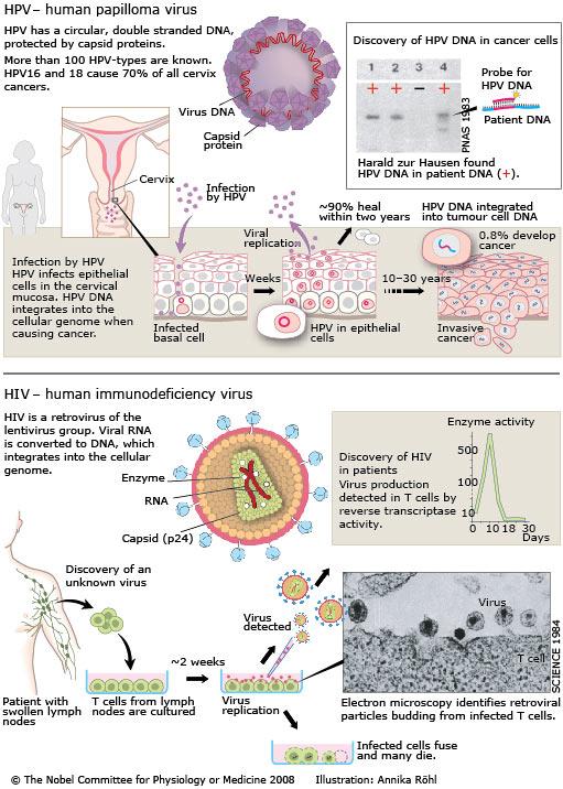 Hiv and ovarian cancer - ceas-mana.ro