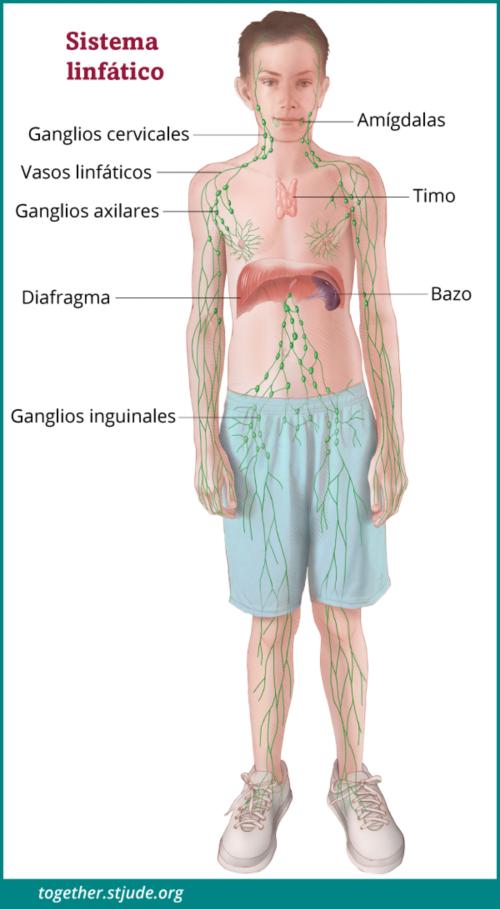 cancer hodgkin linfoma cum să dai pastile de viermi viermi