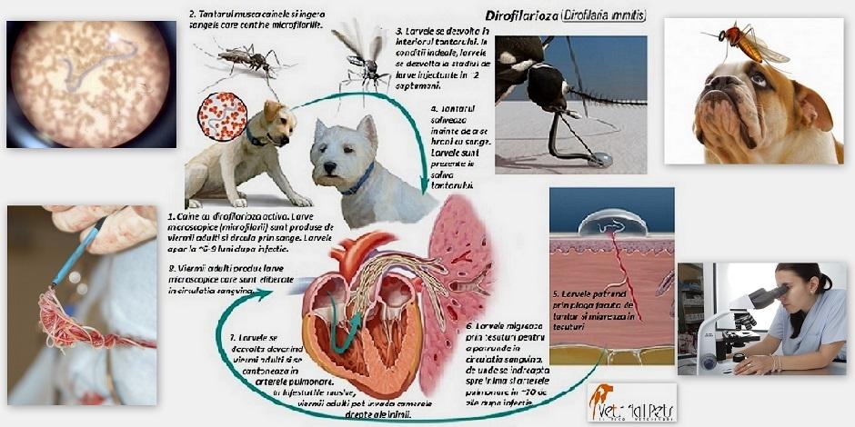 Metode populare de a scăpa de viermi la adulți Ce pastile să aleagă dintre viermi