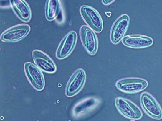 medicamente pentru tratamentul enterobiozei la adulți