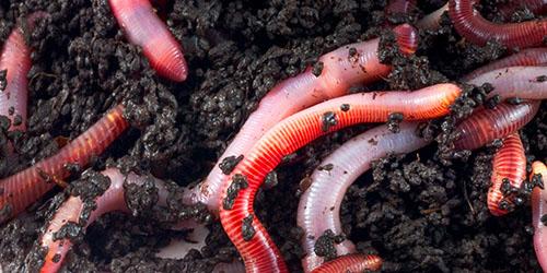 tipuri de viermi ai sufletului uman papiloma en la boca de un nino
