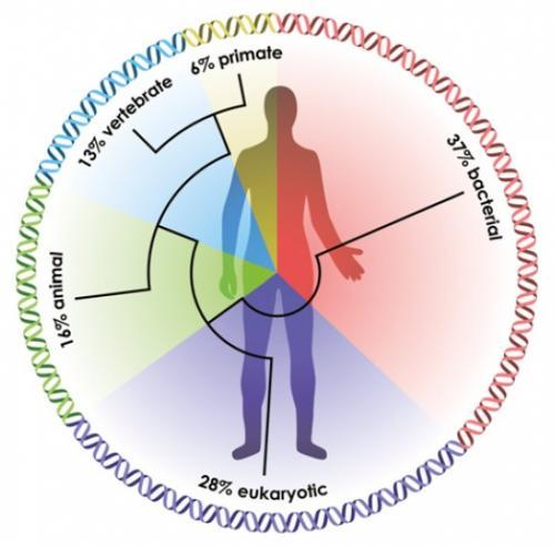 bacterii benefice omului