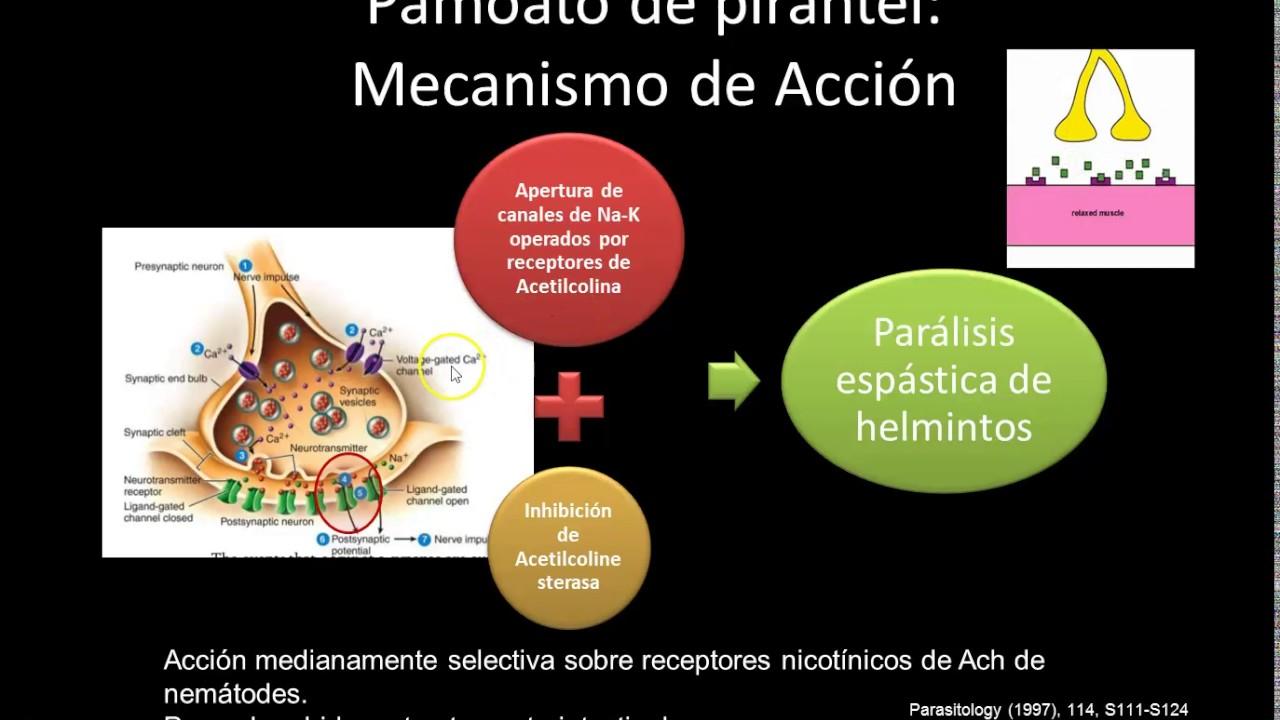 anticorpi împotriva infecțiilor cu helminth