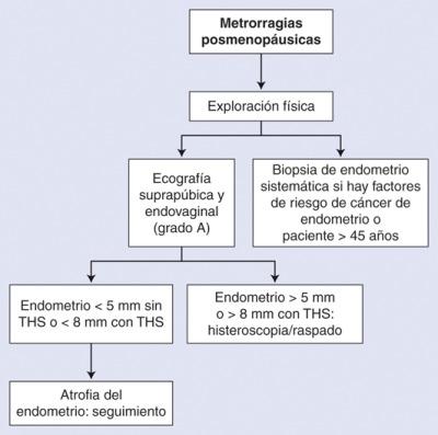 cancer endometrial fisiopatologia