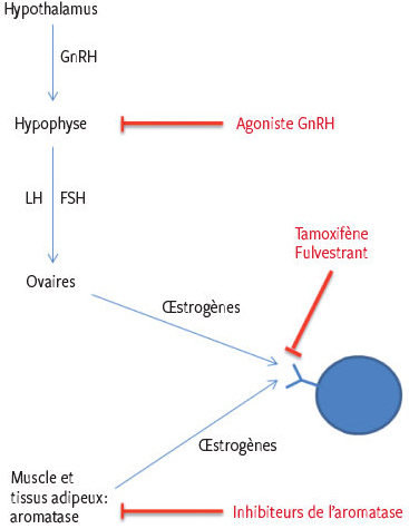 bacterie kawasaki meaning for papilloma