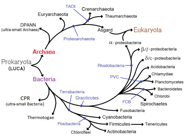ce bacterii se numesc paraziți
