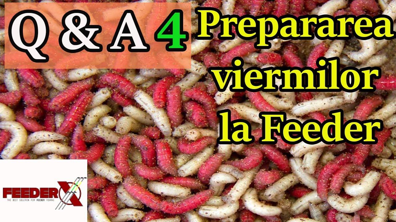 viermi copii simptome tratament simptomele viermilor viermi la adulți