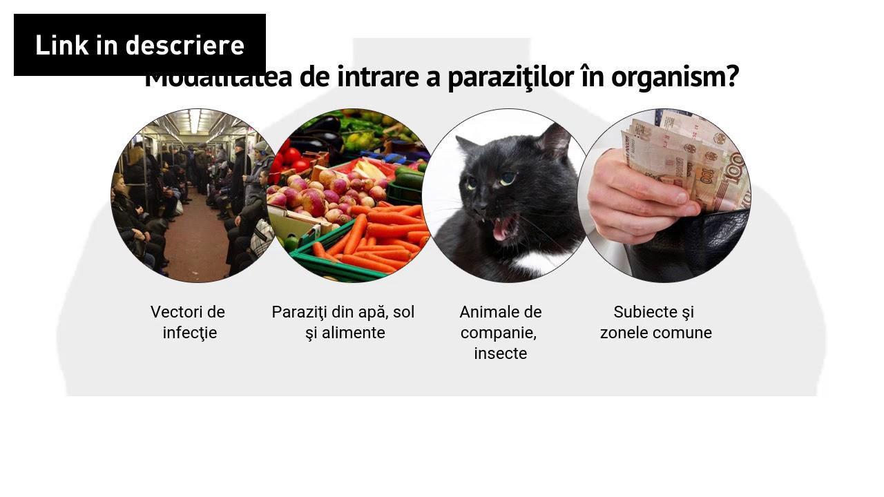 cum să elimini paraziții din intestine