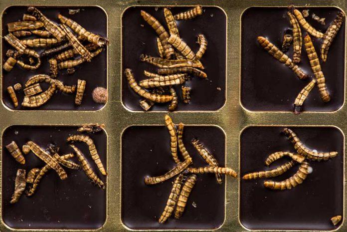 corpul uman mănâncă paraziți îndepărtați papilomul din biysk