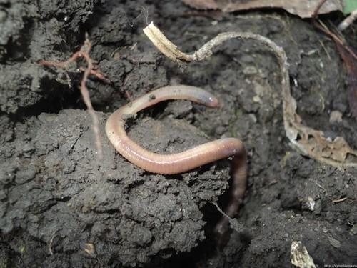 este ușor să scoți acești viermi parazitii noi vrem respect