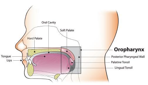 Human papillomavirus (hpv) in head and neck cancer - Hpv in head and neck cancer review