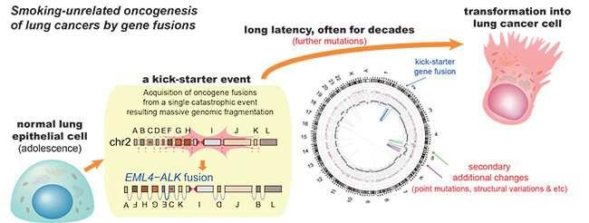 lung cancer genetic mutations human papillomavirus urethritis