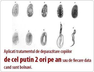 tratamentul viermilor de tip vierme