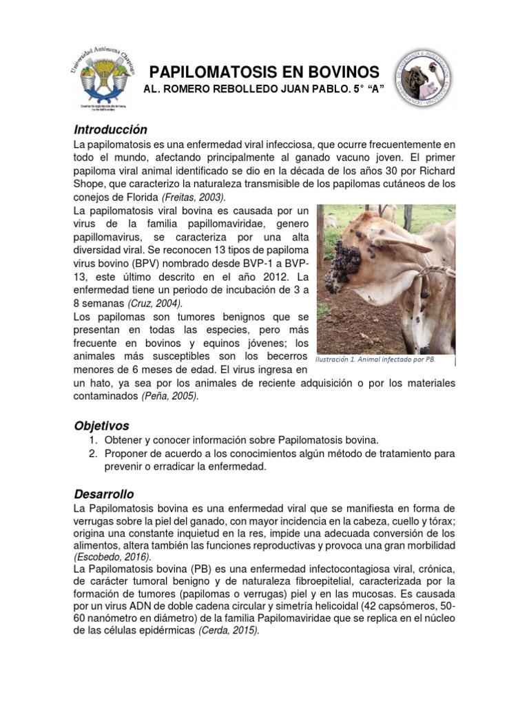 tratamiento de papilomatosis en caballos informatica pentru viermi