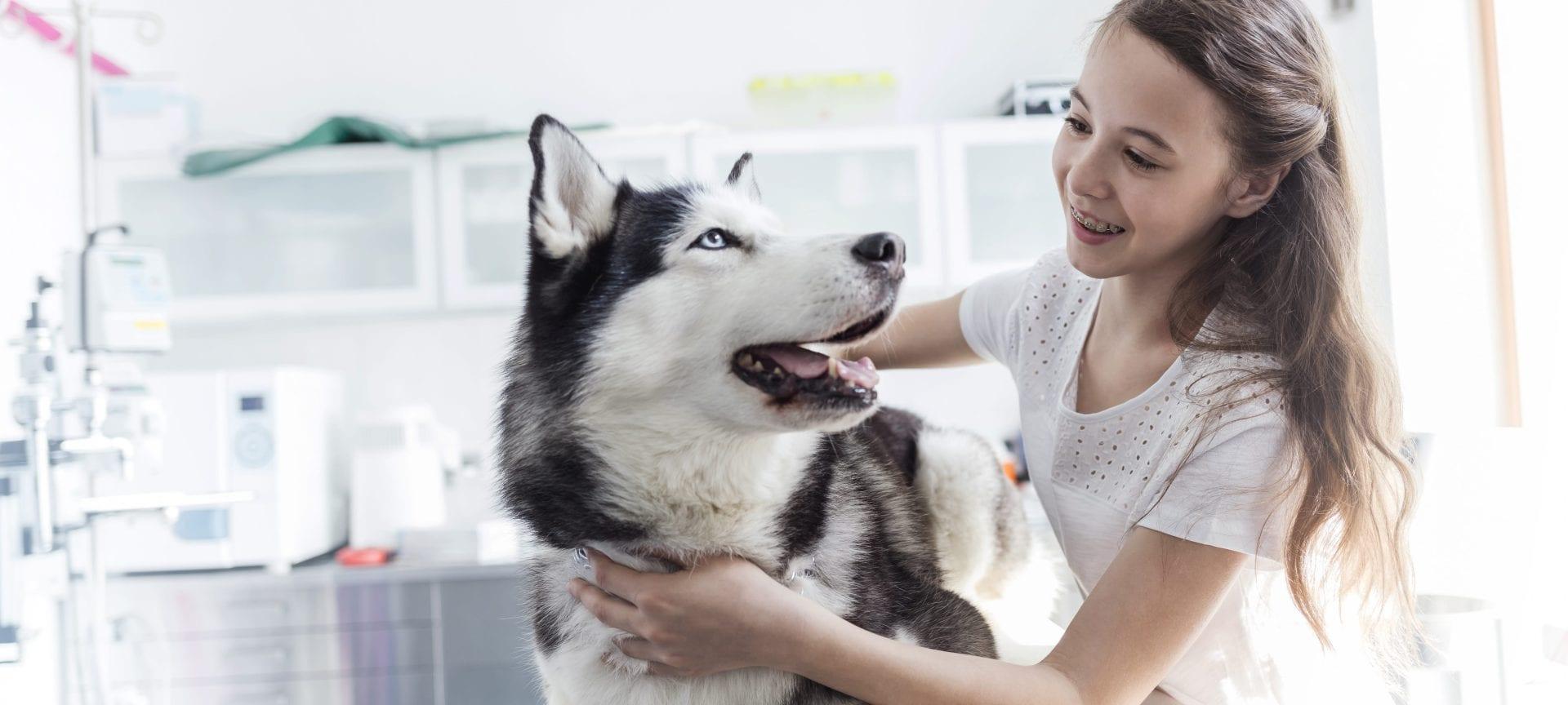 Viermi Husky cum să tratezi Medicamentele HPP pentru tratament