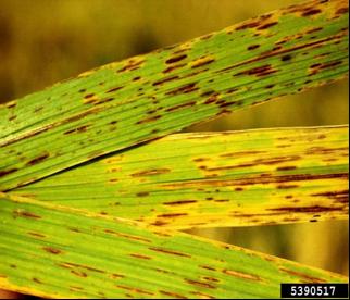 medicament helmintox îndepărtarea papiloamelor pe pleoape