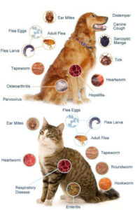 tipuri de paraziti externi papilomavirusul este tratat sau nu