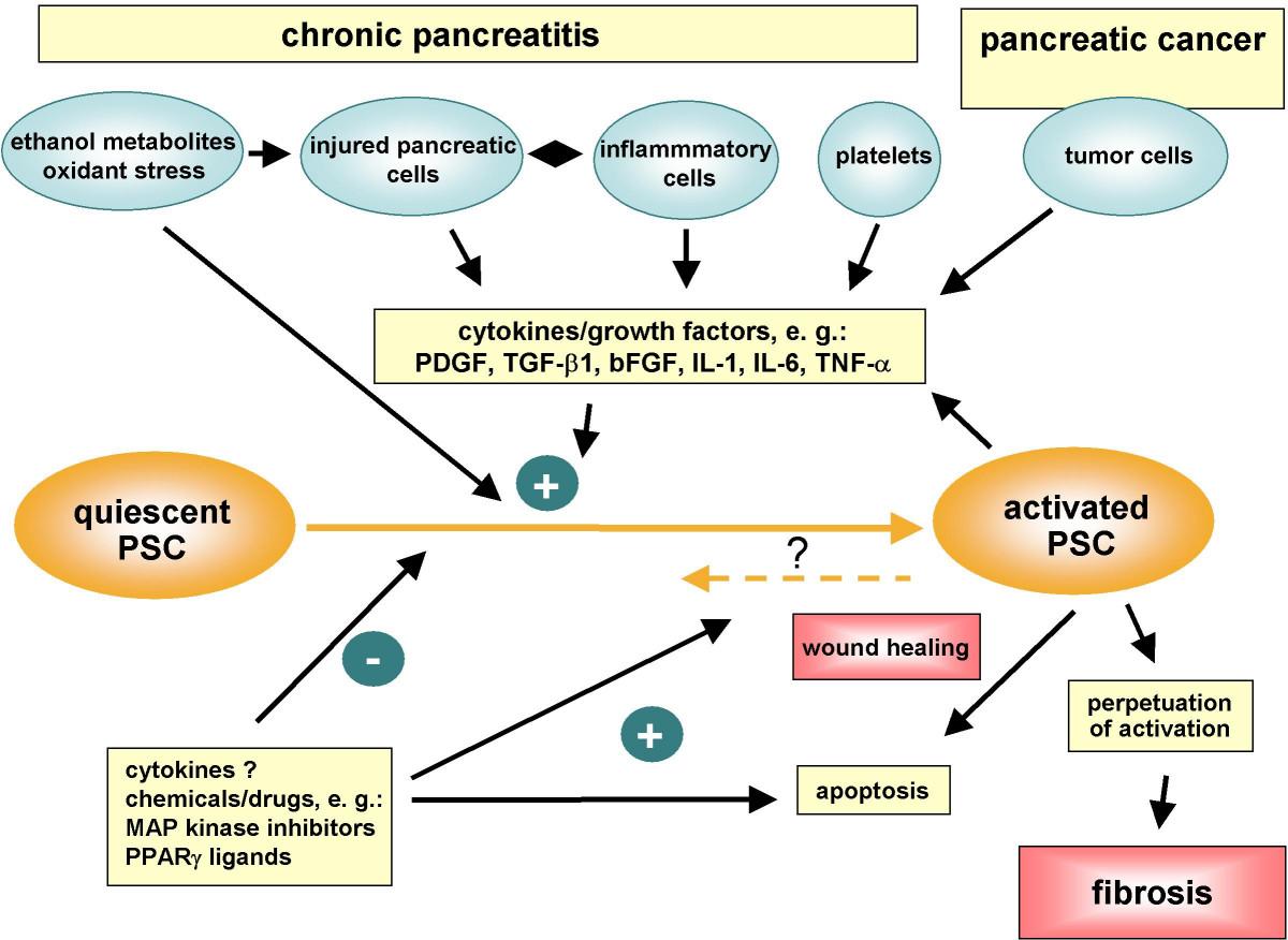 Pancreatic cancer adenocarcinoma, Meniu de navigare