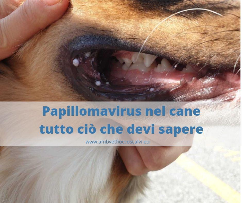 papilloma virus quando operare