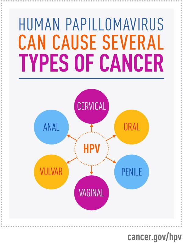 Impactul infecţiei HIV asupra dezvoltării cancerelor cutanate, Hpv liver cancer