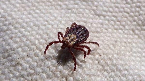 cum să scapi de paraziți prin post viermi la copiii cu nematozi