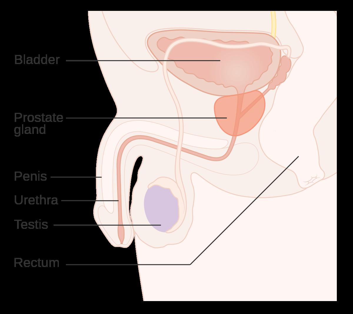 cancer colon varsta 20 ani cancerul de colon se poate vindeca