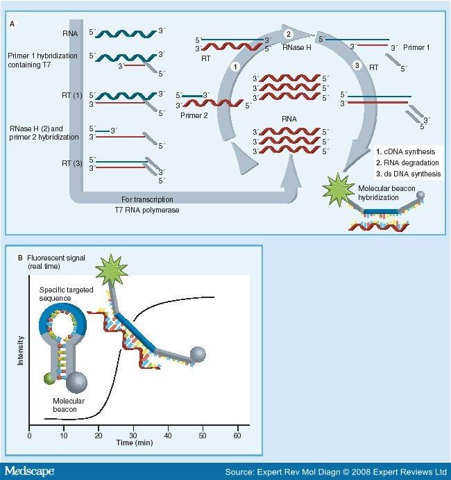 papillomavirus dna detection