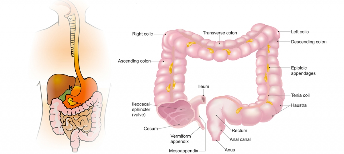 simptomele dipyllobothriasis la adulți giardia duodenalis ciclo de viață