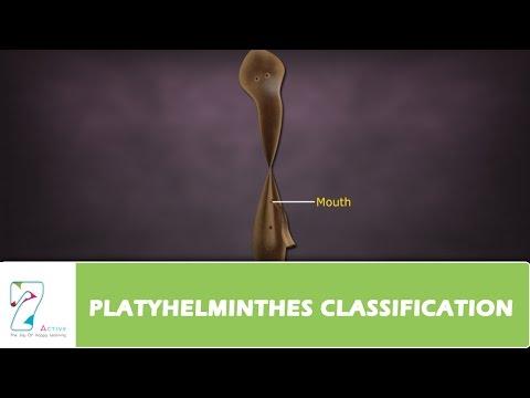 structura corpului platyhelminthes cervicale