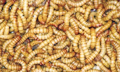 agenți antiparazitari pentru viermi pulbere pentru verucile genitale