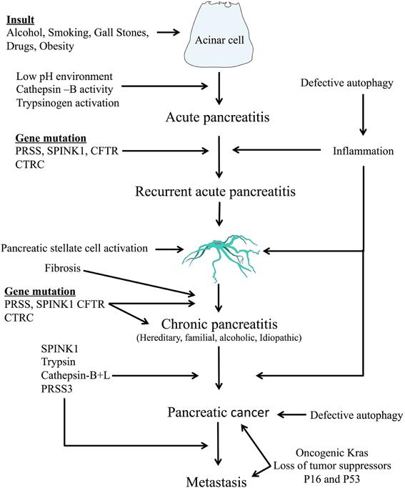 pancreatic cancer pancreatitis oxiuros ajo