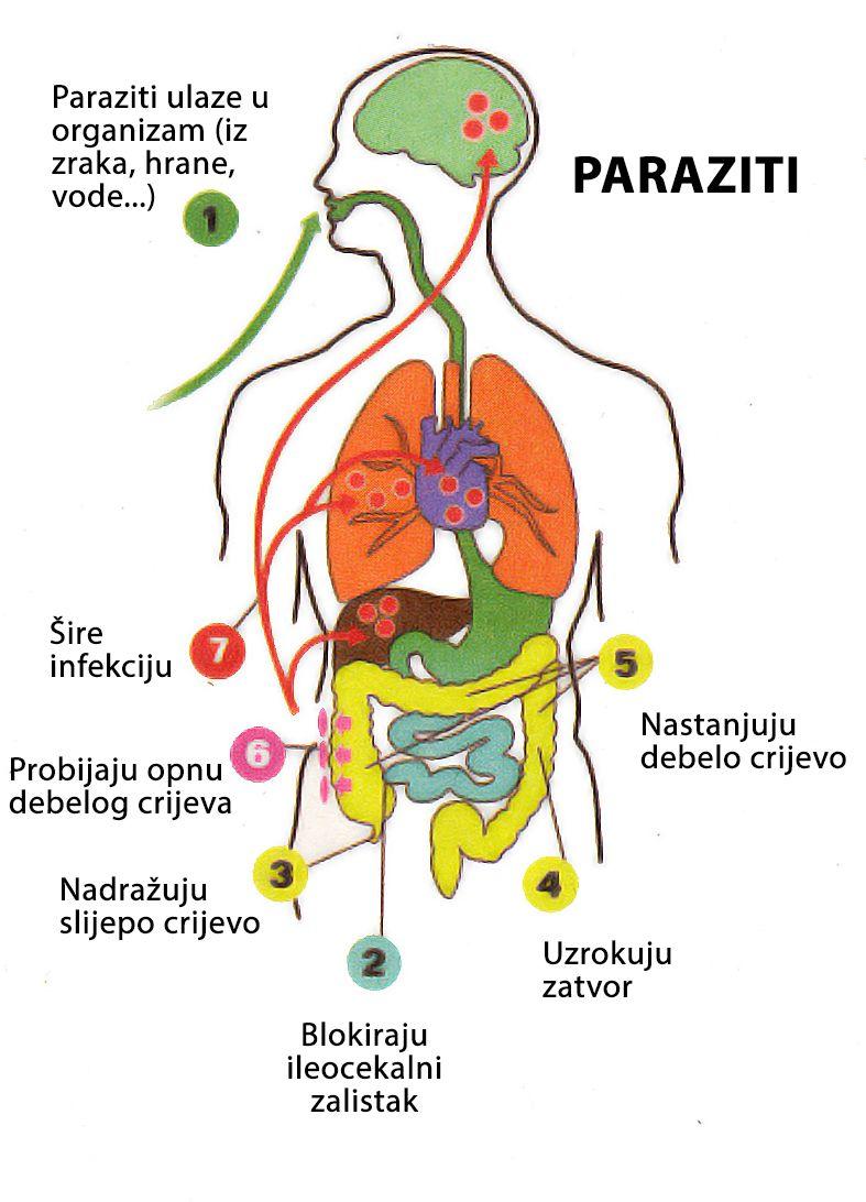 Ce medicamente să luați pentru paraziți ,după ce perioadă după tratament dispare tusea din viermi